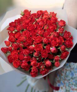 Põõsas roosid